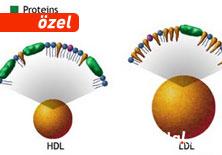 �yi kolesterol (HDL), nas�l k�t� oldu?